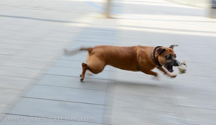 Kameratester Kamera tester kamera test nikon d5100 sigma 18-35 objektiv tierfotografie tier fotografie hund hundefotografie