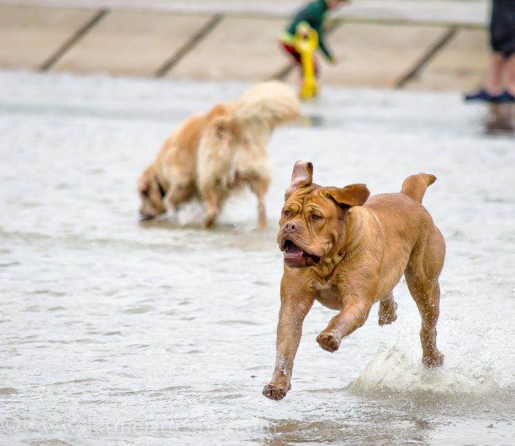 kameratester hund tier fotografie tierfotografie