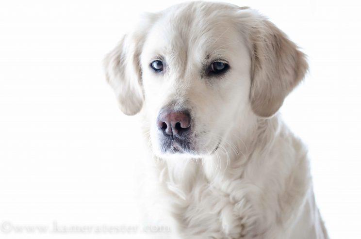 Kameratester Kamera tester kamera test nikon d5100 sigma 105mm makro objektiv tierfotografie tier fotografie hund hundefotografie